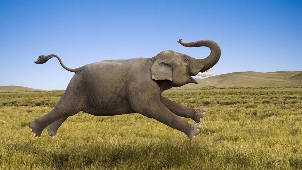Храни Слона